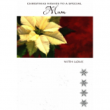 Mum Xmas - Cream Flower