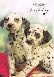 Puppies & Kittens - Dalmatians