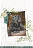 Blank Card - Black Dog