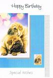 Puppies & Kittens - Bulldogs